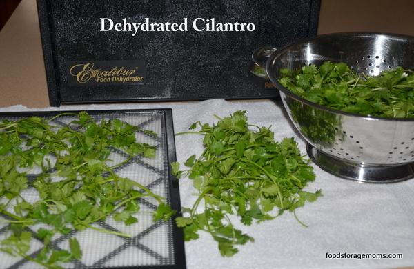 dehydrate-cilantro