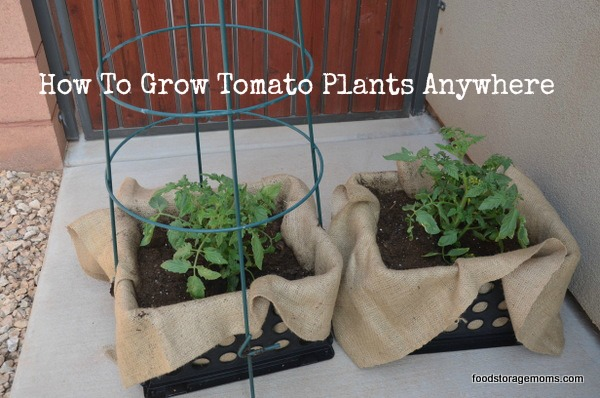 How To Grow Tomato Plants Anywhere