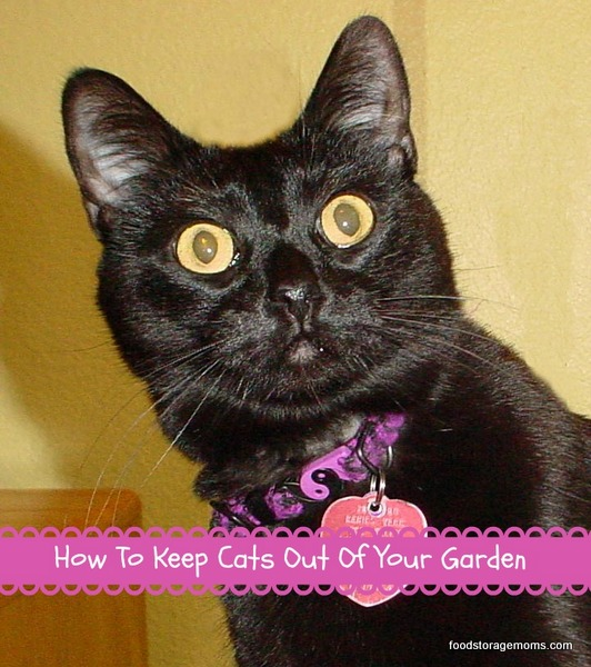 10 Tips To Keep Cats Out Of Your Garden Food Storage Moms