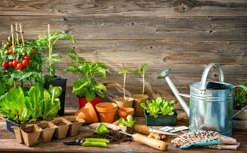 Everything You Need To Know To Start Your Garden