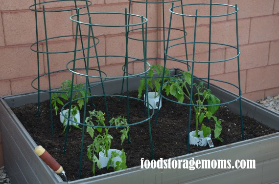 How To Plant Tomatoes In Your Raised Garden | via www.foodstoragemoms.com