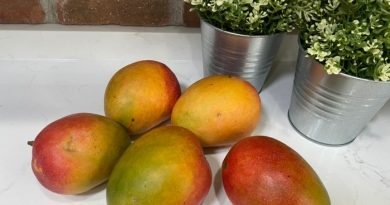 How To Dehydrate Mango