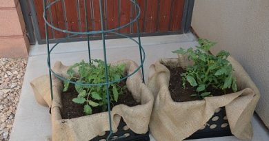 Grow Tomato Plants Anywhere