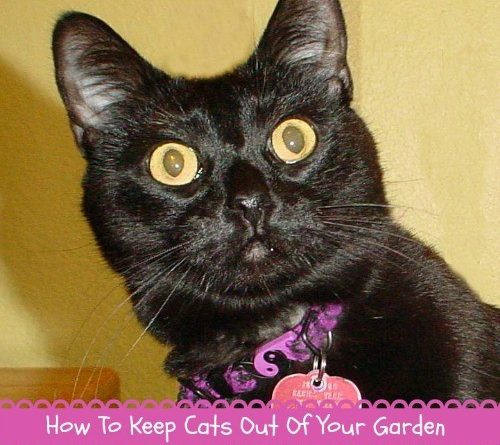 how to keep dogs and cats out of garden