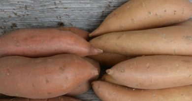Yams Versus Sweet Potatoes