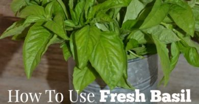 How To Use Fresh Basil