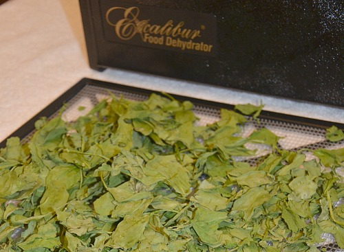 dehydrate spinach