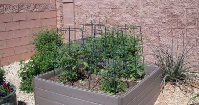 Gardening In Raised Garden Beds