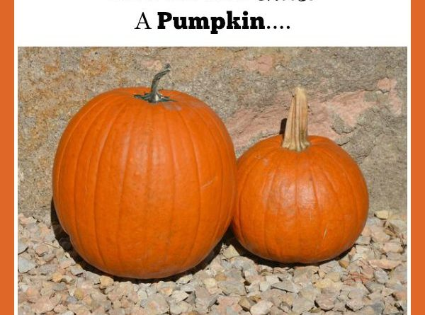 Pumpkins-How Do You Choose A Pumpkin | by FoodStorageMoms.com