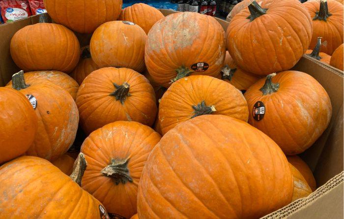 How Do You Choose A Pumpkin