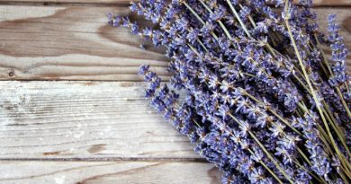 9 Reasons I Store Lavender Oil For Survival by FoodStorageMoms.com