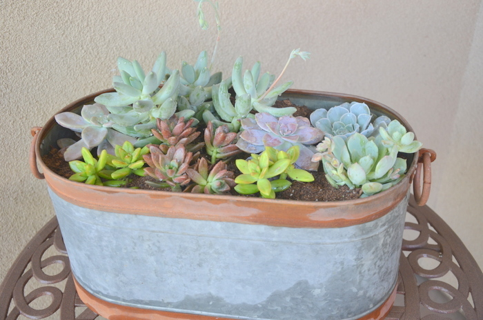 You Will Love Growing Succulents