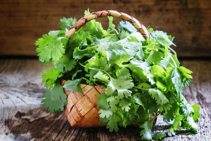 How To Preserve Cilantro From The Garden
