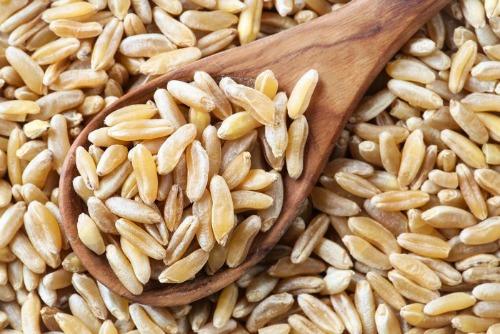 cook Kamut Grain
