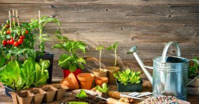 start your garden