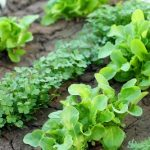 How To Prepare Gardens For Spring Planting
