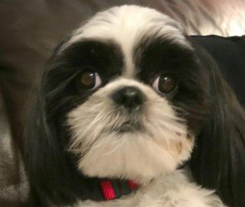 Dog Having Seizures From Eating Human Food