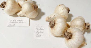 Hard and Soft Neck Garlic