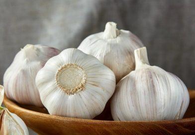 Plant Garlic