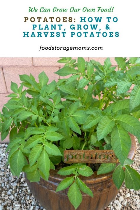 Potatoes: How To Plant, Grow, & Harvest Potatoes