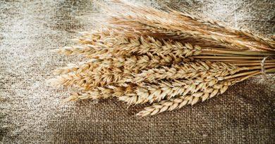 Grind Wheat