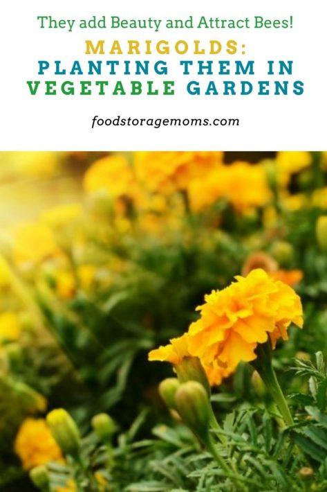 Marigolds: Planting Them In Vegetable Gardens