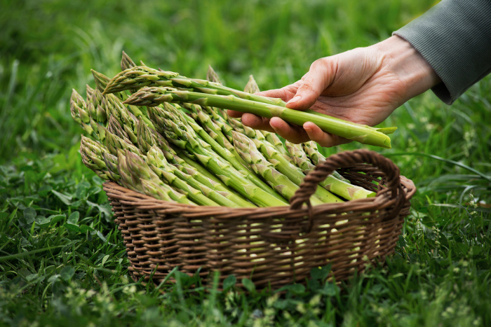 Fresh Asparagus in a basket