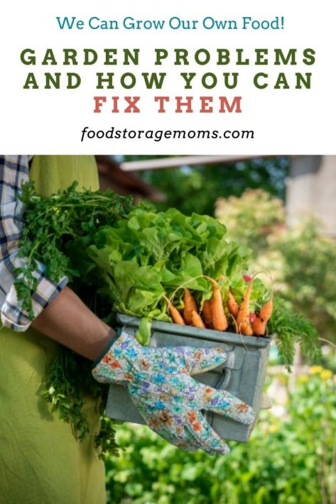 Garden Problems And How You Can Fix Them