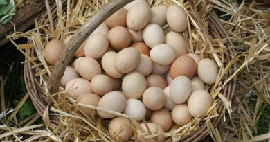 What You Need to Know About Farm Fresh Eggs