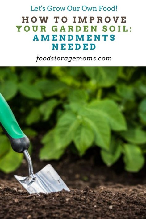 How to Improve Your Garden Soil: Amendments Needed