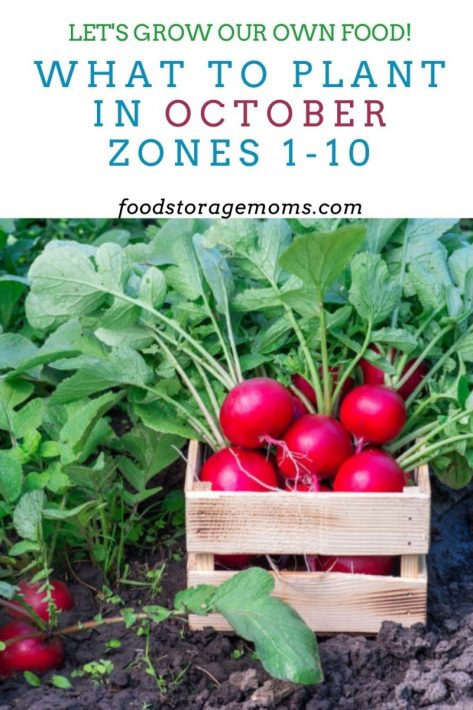 What To Plant In October-Zones 1-10