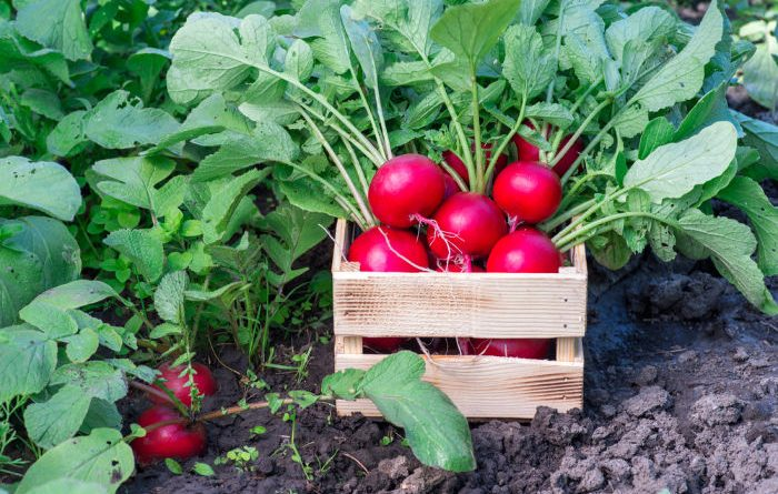 What To Plant In October