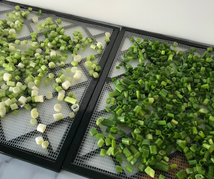 Green onions and Scallions ready to dehydrate