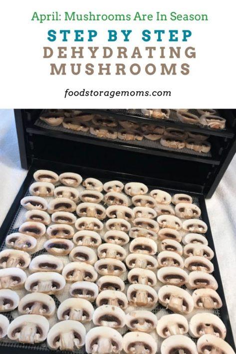 Step By Step Dehydrating Mushrooms