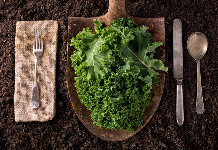How To Make Kale Powder and Use It Every Day