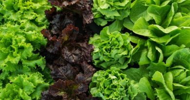 What to Plant in January-Zones 1-10