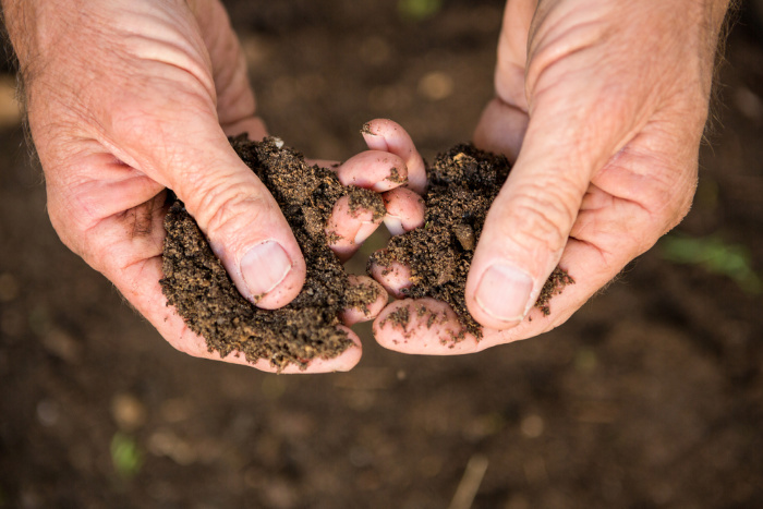 What To Plant In February Garden Soil in Hands