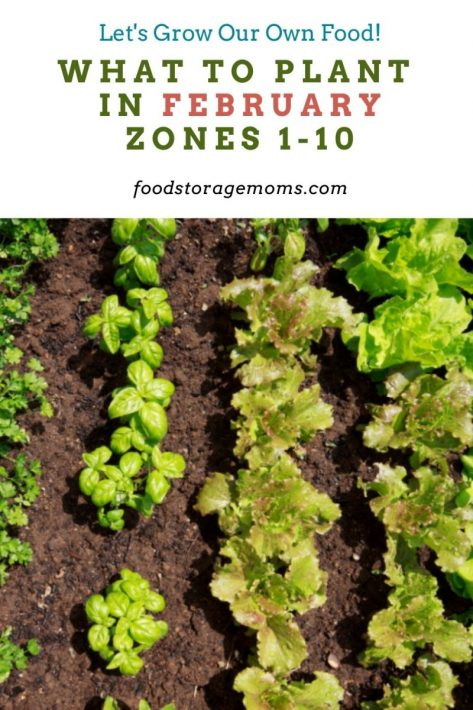 What To Plant In February-Zones 1-10