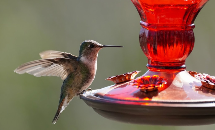Hummingbird perched on feeder