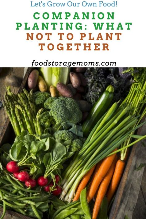 Companion Planting: What Not to Plant Together