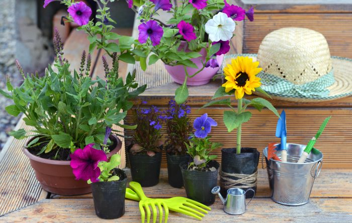 Flowers in pots ready to plant