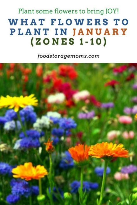 What Flowers to Plant in January (Zones 1-10)
