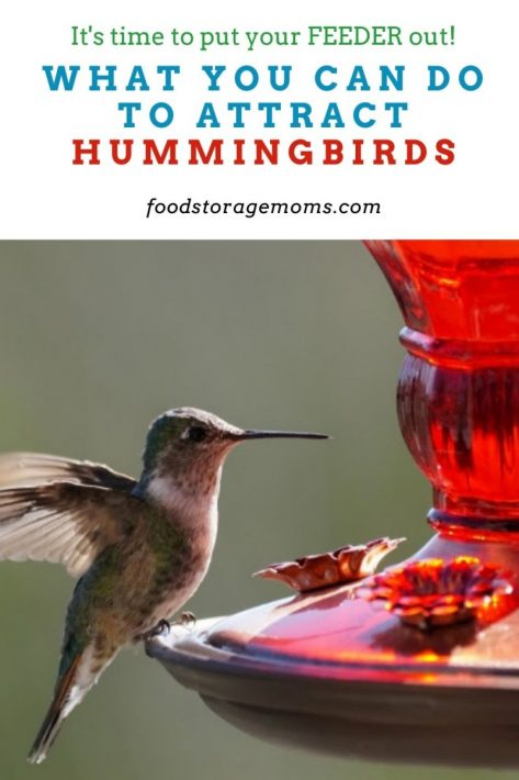 What You Can Do to Attract Hummingbirds