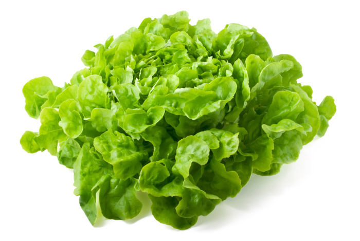 Butterhead Lettuce: Everything You Need to Know