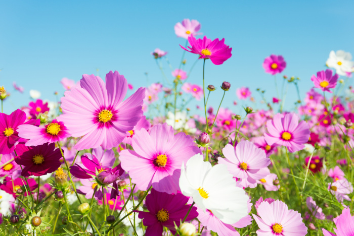 What Flowers to Plant in April (Zones 1-10)