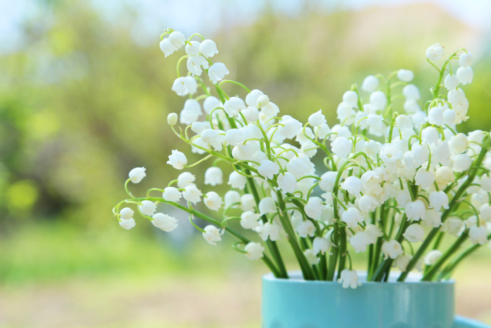 Lilly of the Valley flowers in a pot