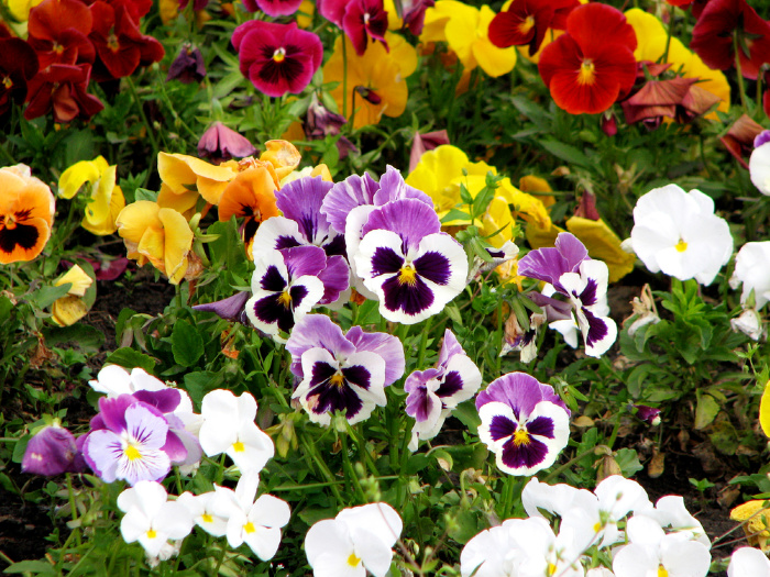 What Flowers to Plant in March (Zones 1-10)