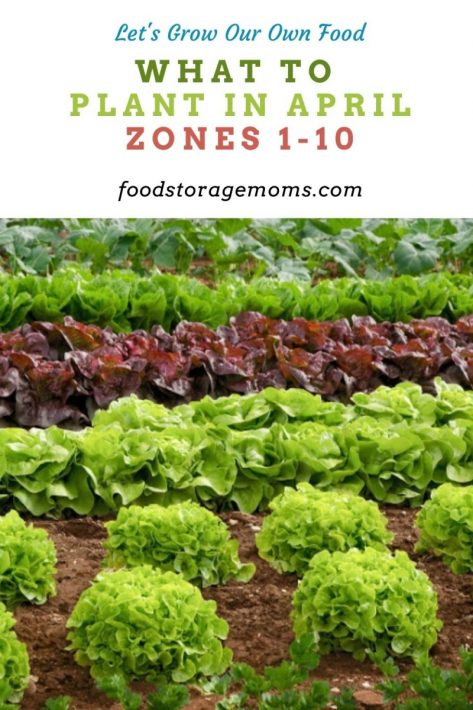 What To Plant In April-Zones 1-10