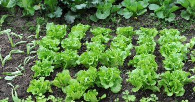 What To Plant In March-Zones 1-10