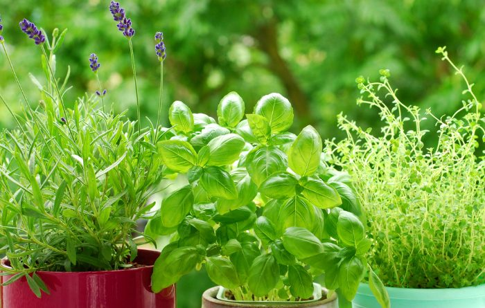 Basil: Everything You Need To Know